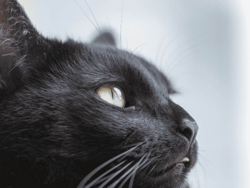 Black cats and dogs may have more difficulty getting adopted.