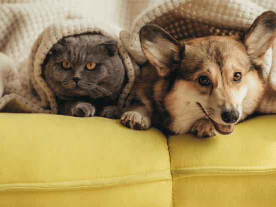 Tell your pet you love him on National Love Your Pet Day