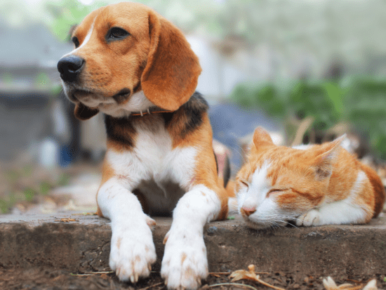 July is Lost Pet Prevention Month! Learn 4 ways you can help keep your pets safely at home.