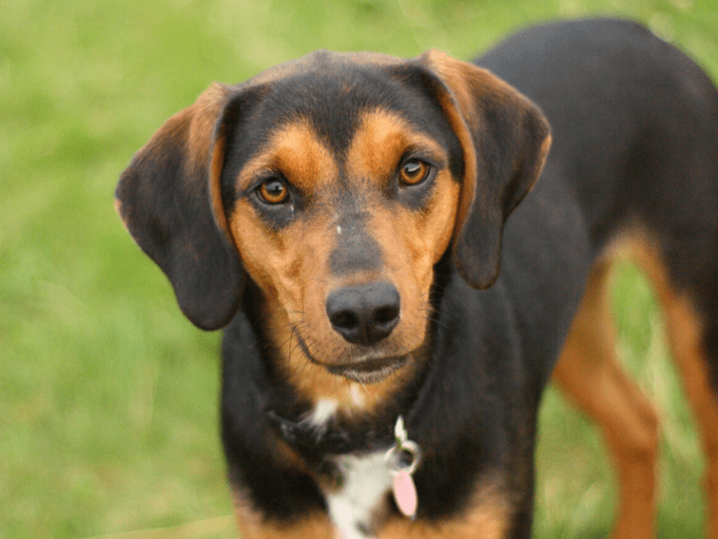 Is your rescue pup a mixed breed? You can check his DNA with this easy tool.