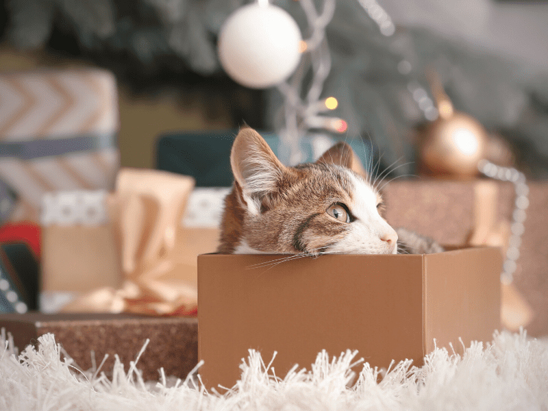 10 Best Holiday Gifts For Cat Moms