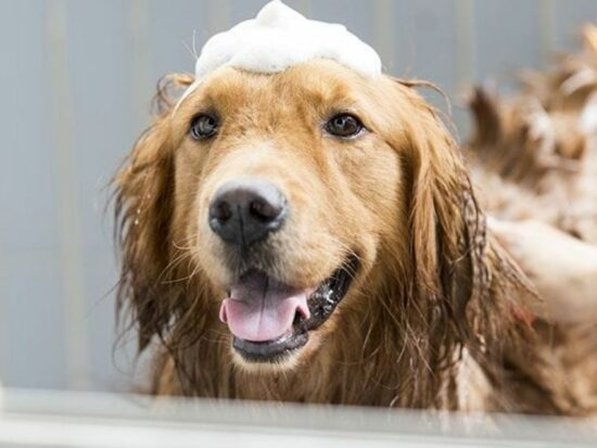 Read this before you buy a Bissell BarkBath