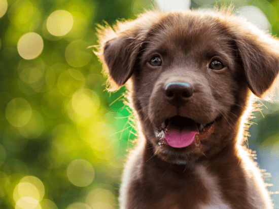 Check out the best gifts for puppies this spring 2021