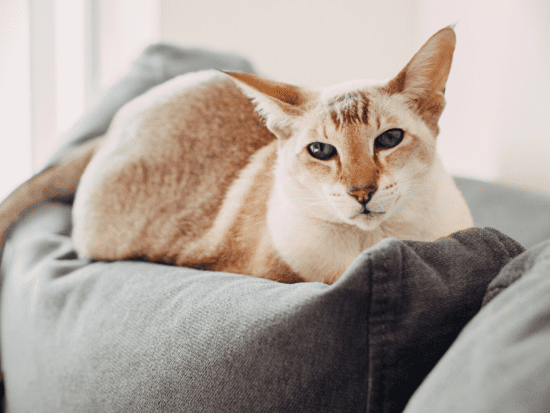 How To Help A New Cat Adjust to a New Home