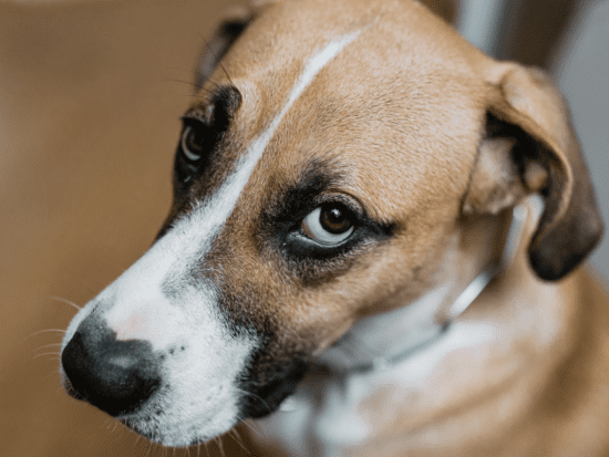 Find out why dogs pee in the house and what you can do to make them stop!