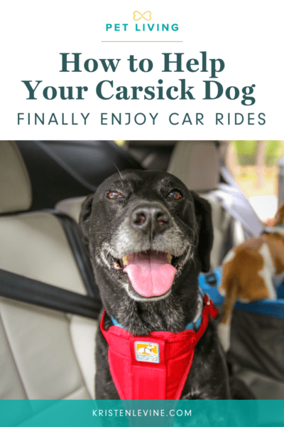 How to Help Your Carsick Dog Finally Enjoy Car Rides